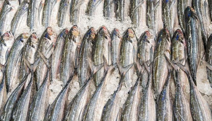 Замороженная рыба: к чему снится
