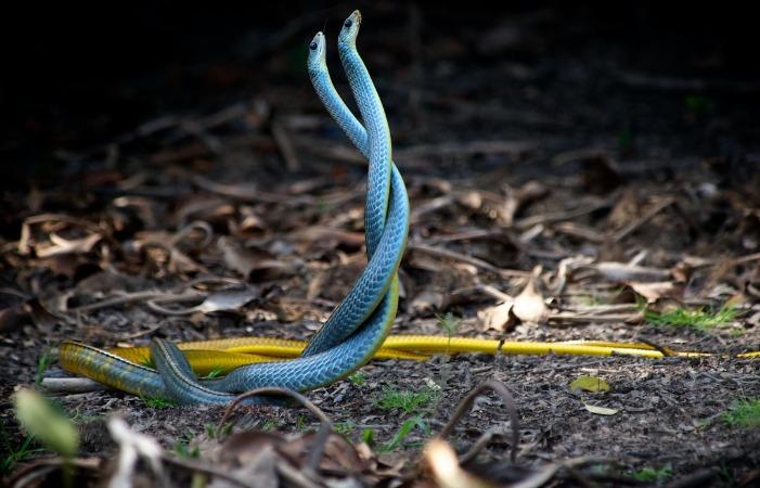 К чему снятся змеи в доме – правда ли то что такие сны не к добру узнаем из нашего сонника.